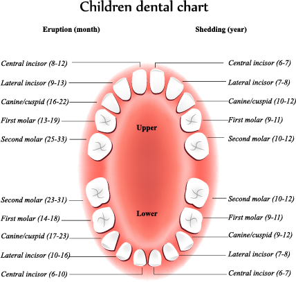When Will My Baby S Teeth Begin To Erupt Orange County Pediatric